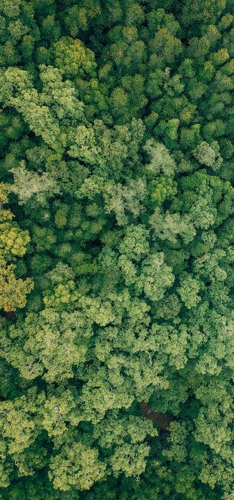 Aerial view of green trees in a forest.